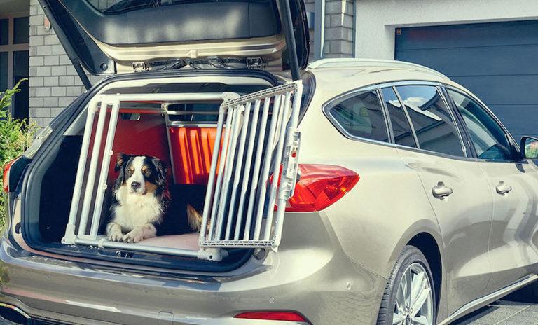 Nuova Ford Focus Wagon: la vettura che garantisce sicurezza e comodità agli amici a quattro zampe