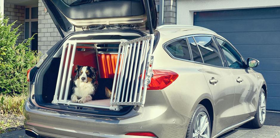 Ford Focus Wagon: l'auto pensata per gli animali